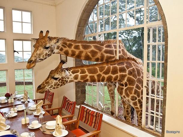 10 самых необычных отелей в мире