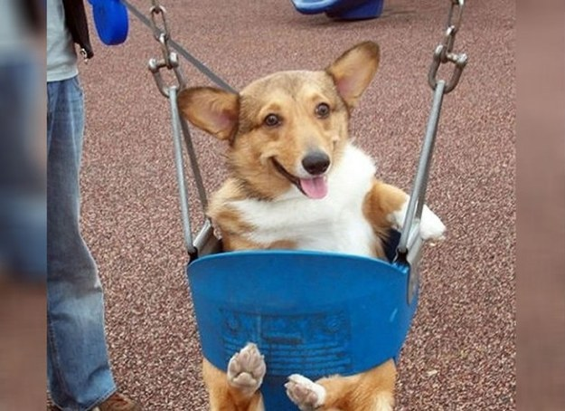 Очаровательные собачки сделают ваш день