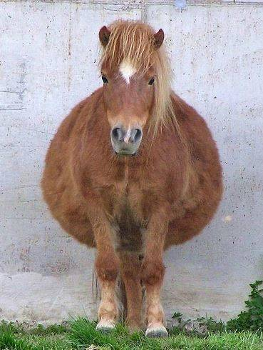 Беременные животные очаруют каждого