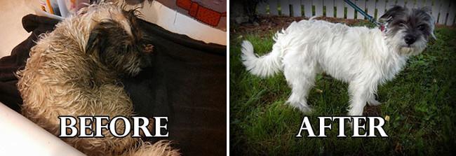 20 невероятных преображений собак