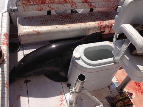 Дельфин покалечил женщину
