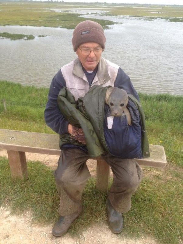 Люди спасли маленького тюленя