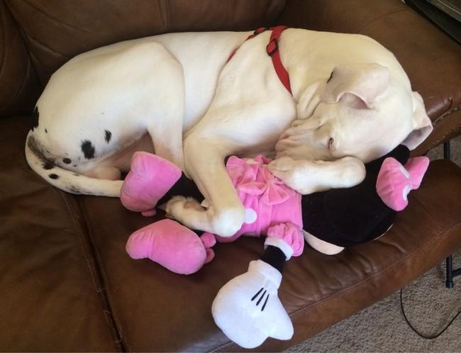 Спящие животные сведут вас с ума и не отпустят на работу