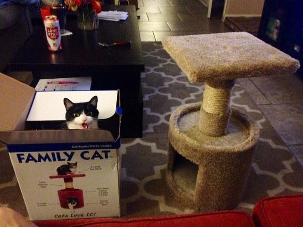 Пятничная подборка очаровательных котов