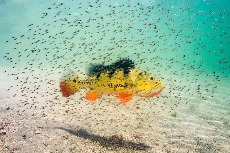 Лучшие фото природы National Geographic 2016 года
