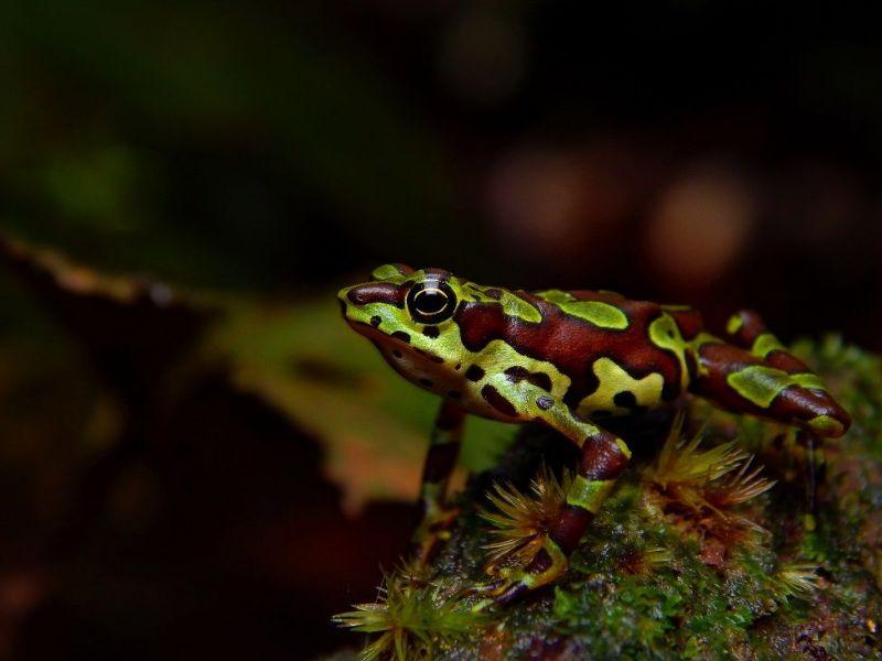 Фото мадагаскарской змеи признано лучшим на престижном конкурсе