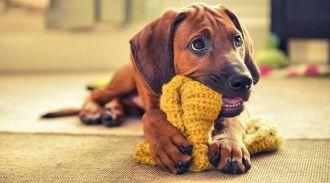 Лучшие фотографии собак Kennel Club 2016