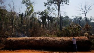 Обезлесение в бассейне Амазонки достигло максимального уровня с 2008 года