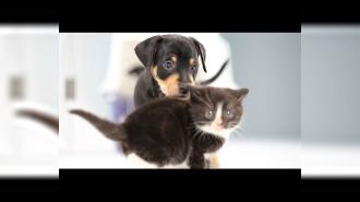 Котята vs. щенки: первая кровь