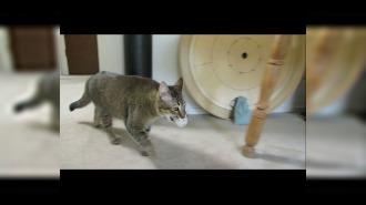 Кошка зарабатывает ужин