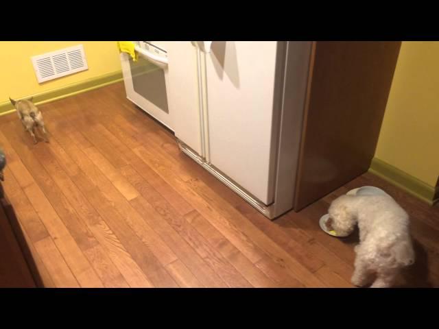 Собачка не любит есть одна