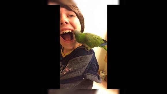 Попугай удалил зуб